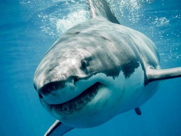 Ngủ mơ thấy cá mập có điềm báo gì? đánh con số gì?